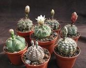 Paquets d'entrées cactus