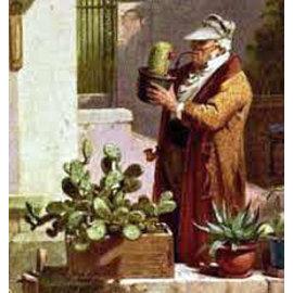 Identification des cactus et plantes succulentes