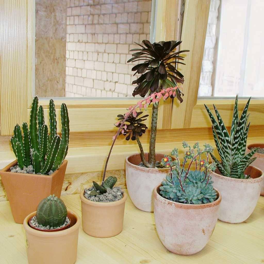 Davanzale Interno Della Finestra piante grasse eccezionale per il davanzale