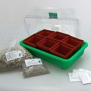 Sowing Top Set 2 of cacti