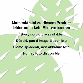 Echinopsis-Hybr. Paramount H