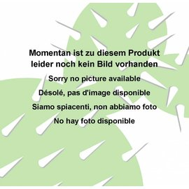 Echinopsis-Hybr.  `Träumerei`