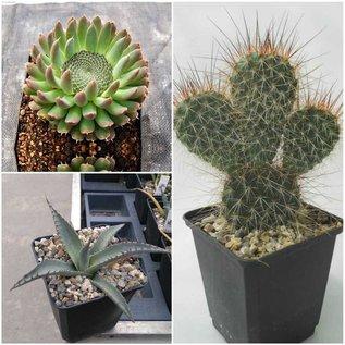 Acción de verano plantas resistentes
