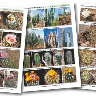 TAXONOMY of the CACTACEAE  - in Englisch