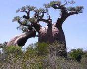 Madagascar special