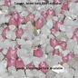 Echinopsis. Schick Hybriden Mix        (Seeds)