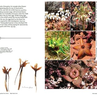 Secrets of Namaqualand Succulents
