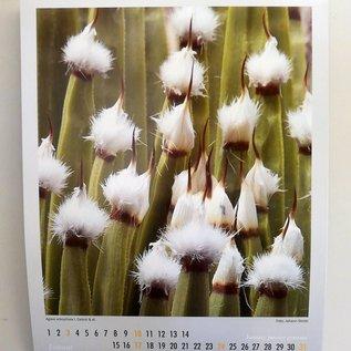 Cactus y otros suculentos calendarios  de 2021 - KuaS Kalender
