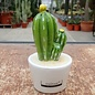 Kaktus Dekofiguren
