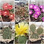 Offer of the month: Opuntia & Delosperma (hardy)