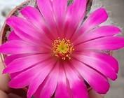 Floraison violette et rose