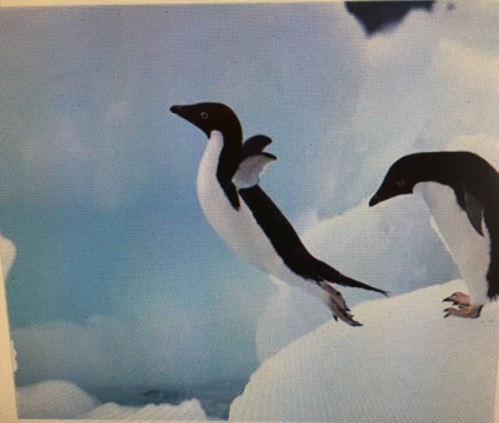 Diamant mozaïek Pinguïn