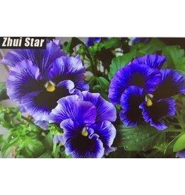 Diamant mozaïek viooltjes paars