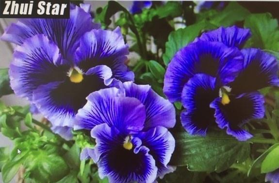 Diamond Painting  viooltjes paars
