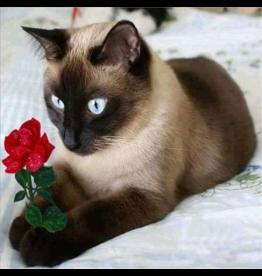 Diamond Painting: Kat met roos
