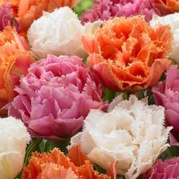 Микс тюльпанов Candy Frills