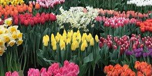 FLOWER SHOW BREEZAND