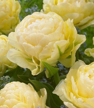 Tulip Bowl of Beauty