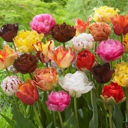 Микс тюльпанов Exclusive Tulips