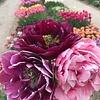 Tulpen Mischung Sweet Dreams