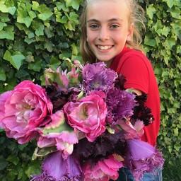 Микс тюльпанов Stella's Choice