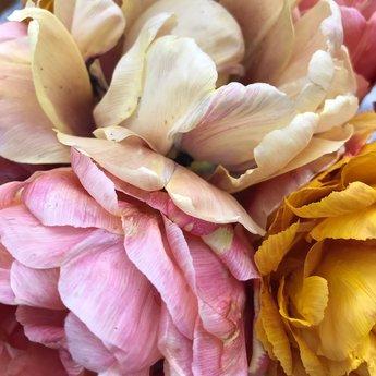 Tulipa Aunt Green
