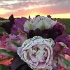 Tulip mixture Pink Sunset