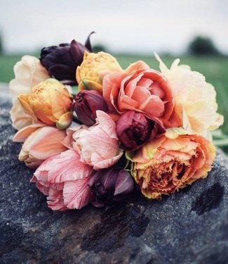 Mélange de tulipes Lottas Favourites