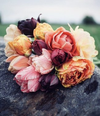 Tulpenmix Lottas Favourites