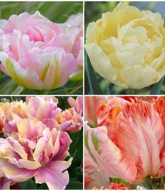 Pastell Tulpen Sammlung