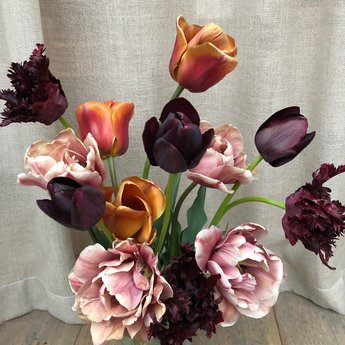Tulipa Esthers Favourites