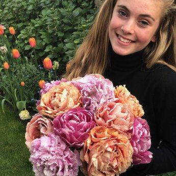 Tulipa Dutch Romance