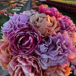 Микс тюльпанов Dutch Romance