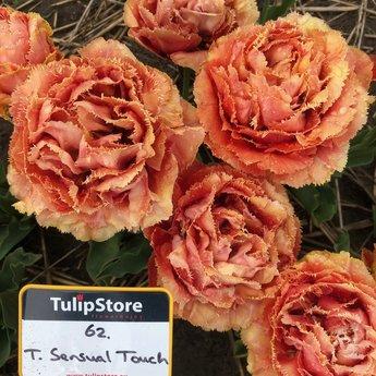 Tulipa Sensual Touch