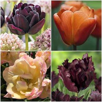Kaffee Tulpen Sammlung