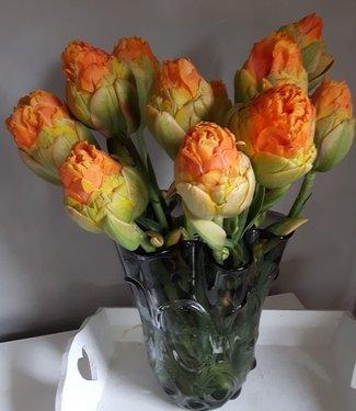 Tulpe Le Lavandou