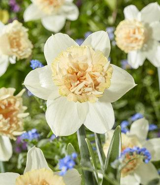 Narcis Petit Four