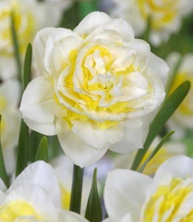 Narcisse Lingerie