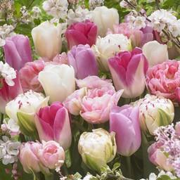 Микс тюльпанов Romantic Spring