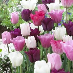 Микс тюльпанов Pretty in Pink
