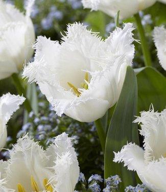 Tulip Signature