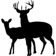 Kameel, Paard & Wild