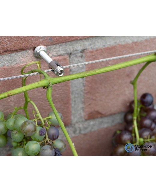 Druiven geleiden Klimhulp kruisschroef Rvs Trellis 2mm Pakket