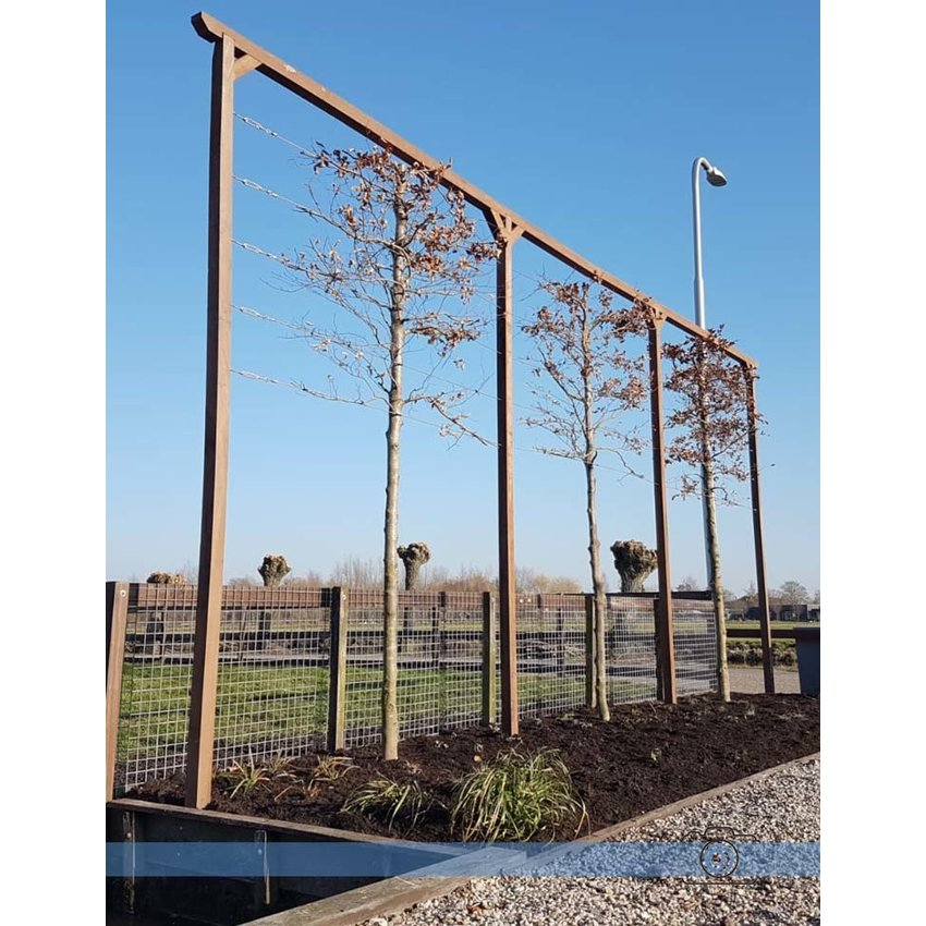 stainless lime trees Constructie Package