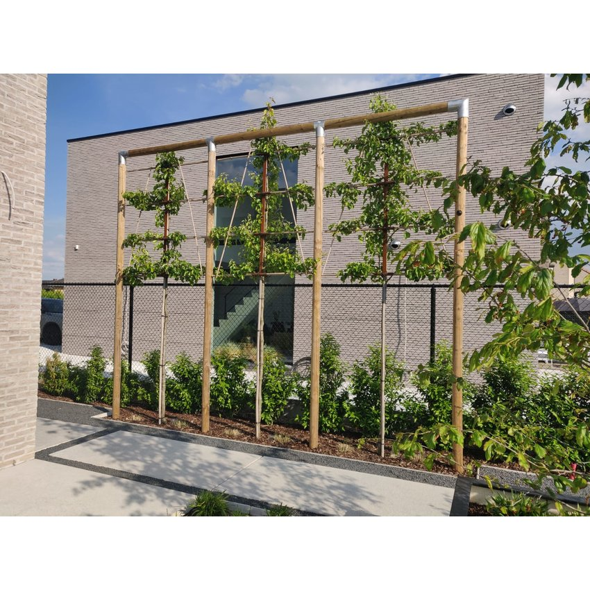 Lime Trees Construction Bundle Galvanised