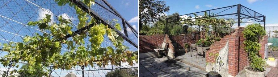 Druiven geleiden met staaldraad