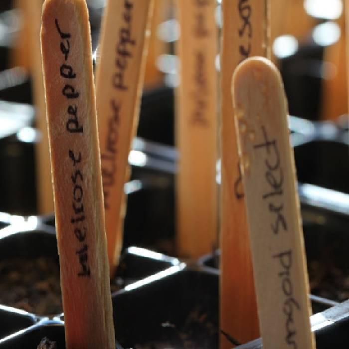 50 houten plantenlabels voor zaailingen