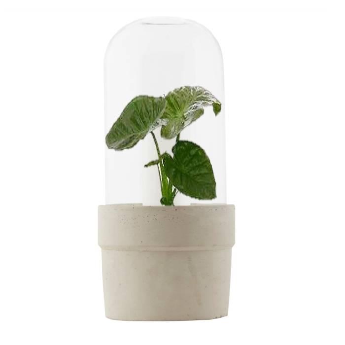 Glazen stolp met betonnen plantpot