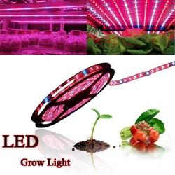 Supply Kweeklamp LED Strip