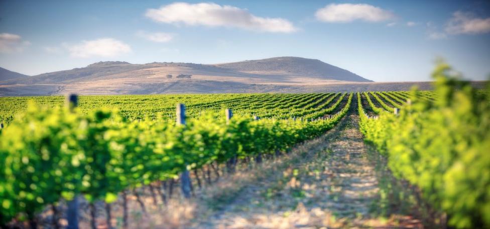 Wist u dat er in maar liefst 90 landen wijn wordt geproduceerd?